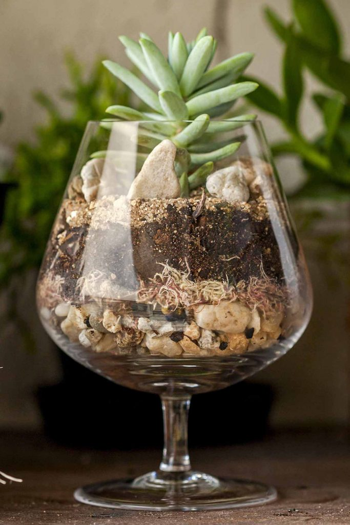 Imagem: Os minijardins podem ser montados nos mais variados tipos de recipientes. Vidros de conserva, jarros e até mesmo copos como este de cristal para conhaque, são perfeitos! Foto: Raphael Günther/Bespoke Content.