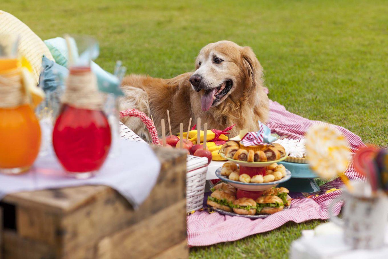 Imagem: Os pets também vão querer participar desta festa! Assim a família inteira pode passar bons momentos juntos. Foto: Raphael Günther/Bespoke Content.
