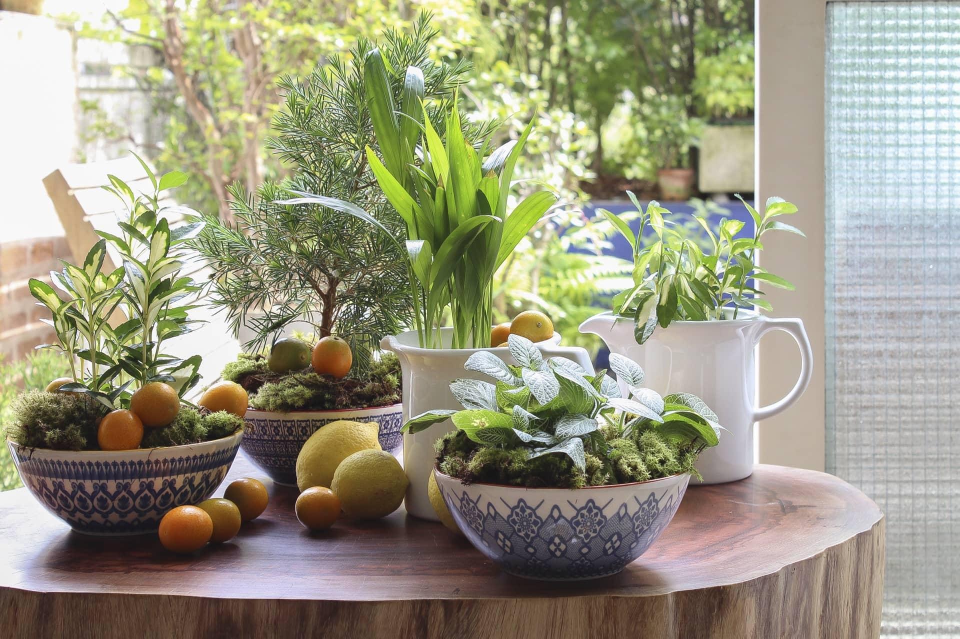 Imagem: Os bowls com estampas diferentes servem de cachepô para os vasinhos verdes. Para dar acabamento, cubra os vasos com musgo verde. Distribua limões sicilianos e laranjinhas Kinkã pelos arranjos e sobre a mesa, para dar um toque de frescor Da esq. para a dir.: Tigela Full La Carreta, Tigela Full Mexican, Tigela Full Ladrilho, todas da Oxford.Foto: Cacá Bratke