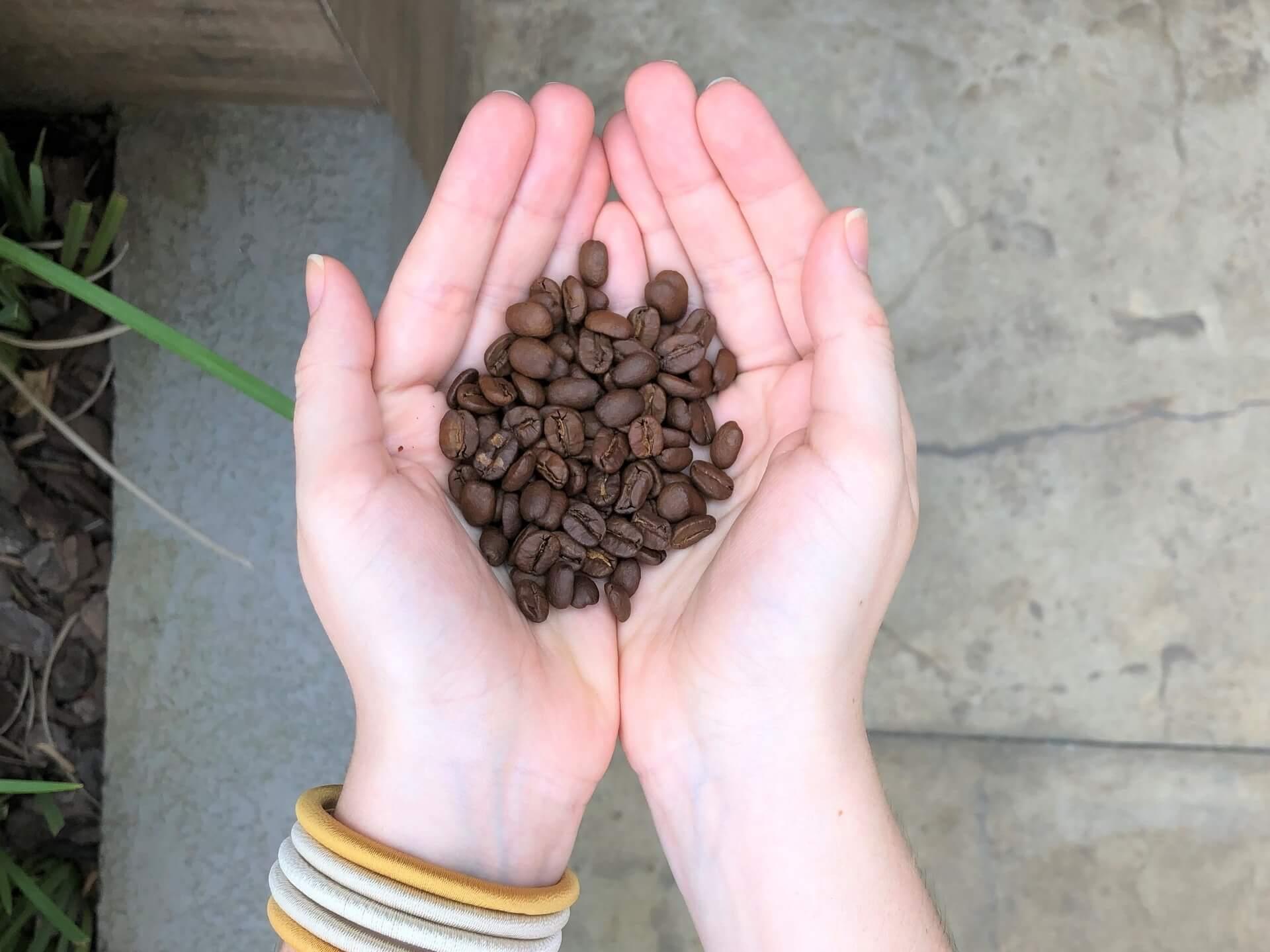 Imagem: Grão de café com torra média. Foto: Arquiteca Projetos Afetivos.