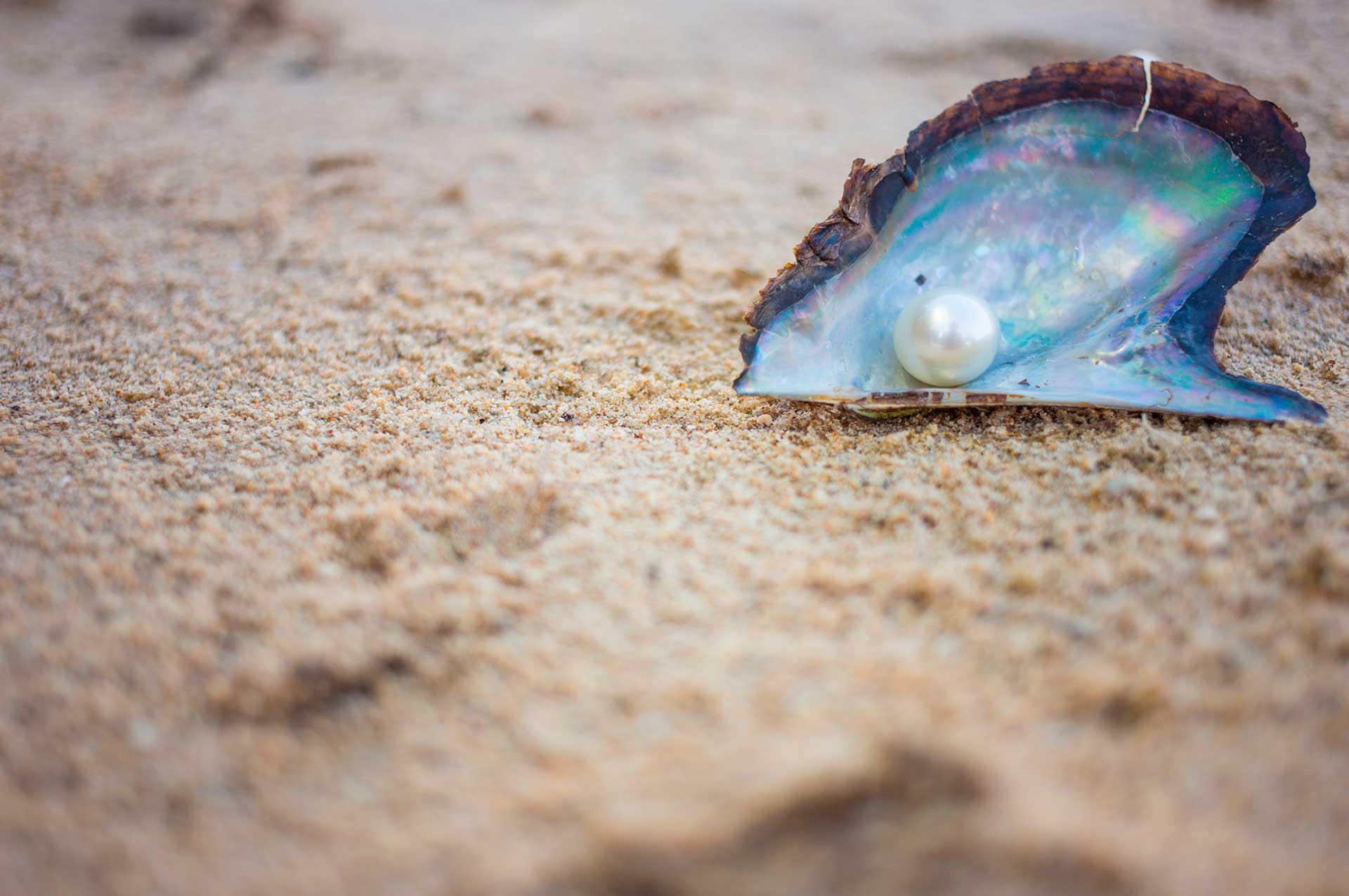 Texto: Pérola em concha: toda a beleza e perfeição da natureza! Fonte: Kittisun/Shutterstock