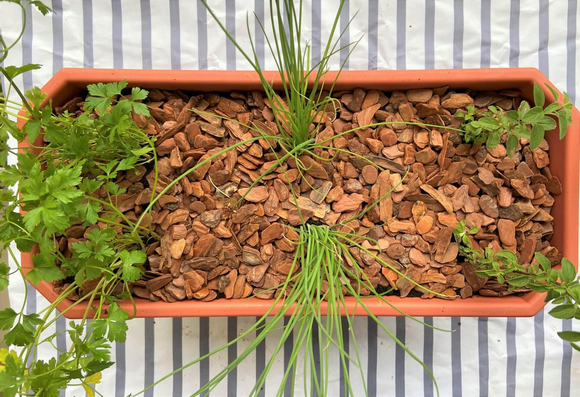 Depois de plantar, é importante regar e colocar em um lugar que pegue sol pelo menos um período do dia. Foto: Arquiteca Projetos.