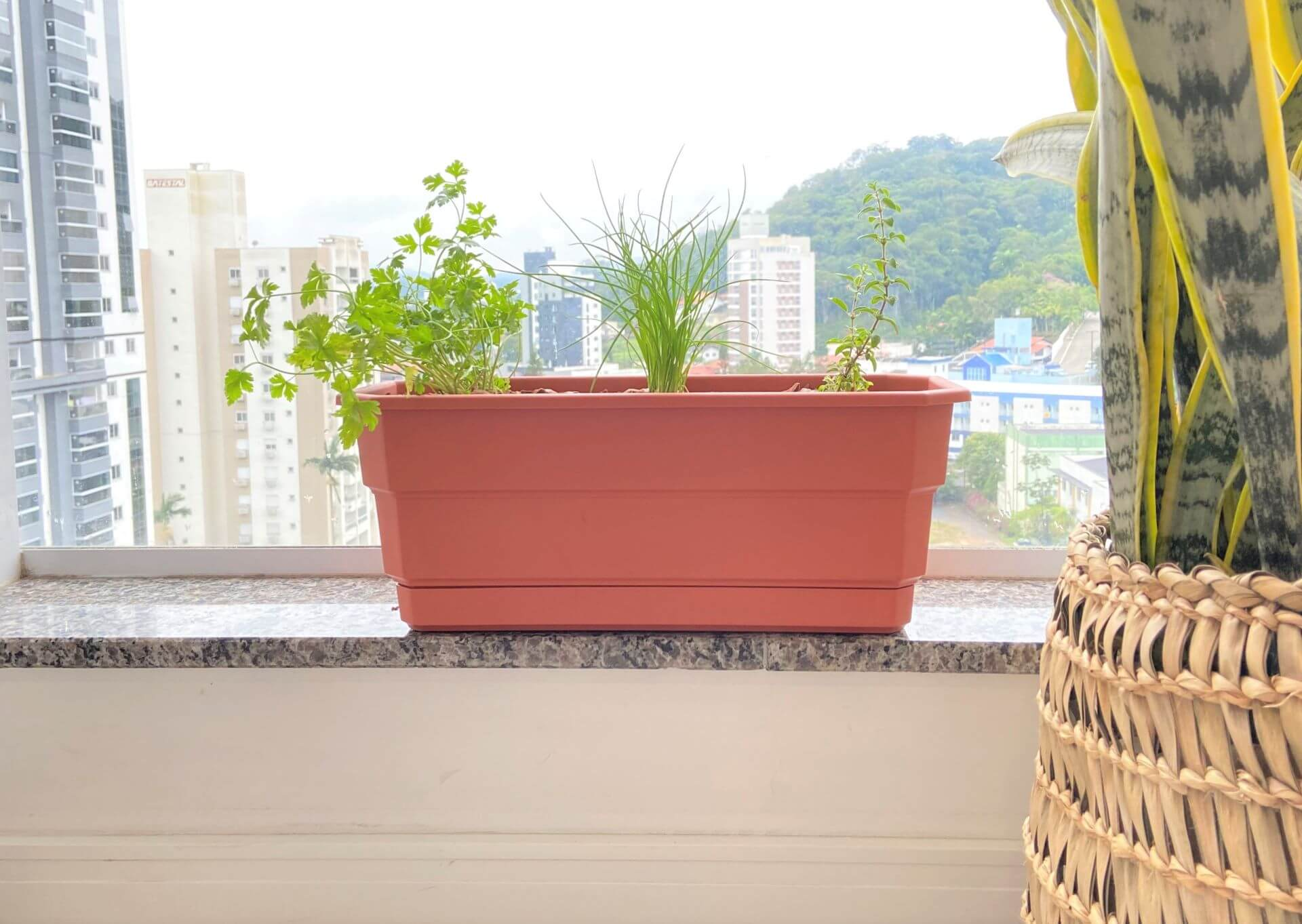Posicionamos o vaso na mureta, para que ele pegue o sol da manhã e consiga se desenvolver bem. Foto: Arquiteca Projetos.
